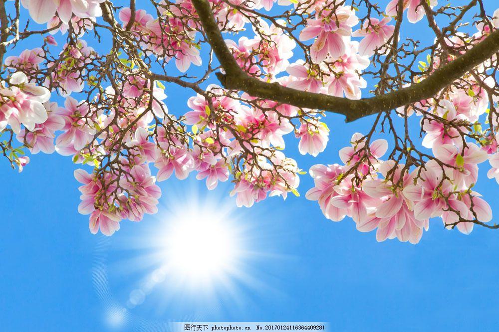 蓝天 阳光 太阳 桃花 花朵 植物 花卉 鲜花 山水风景 风景图片 图片