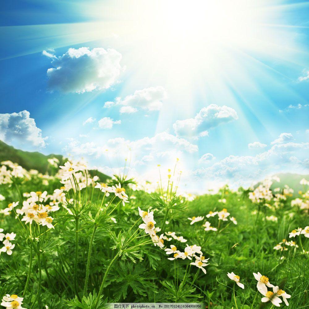 清新风景背景 清新风景背景图片素材 花草 蓝天白云 鲜花 草地