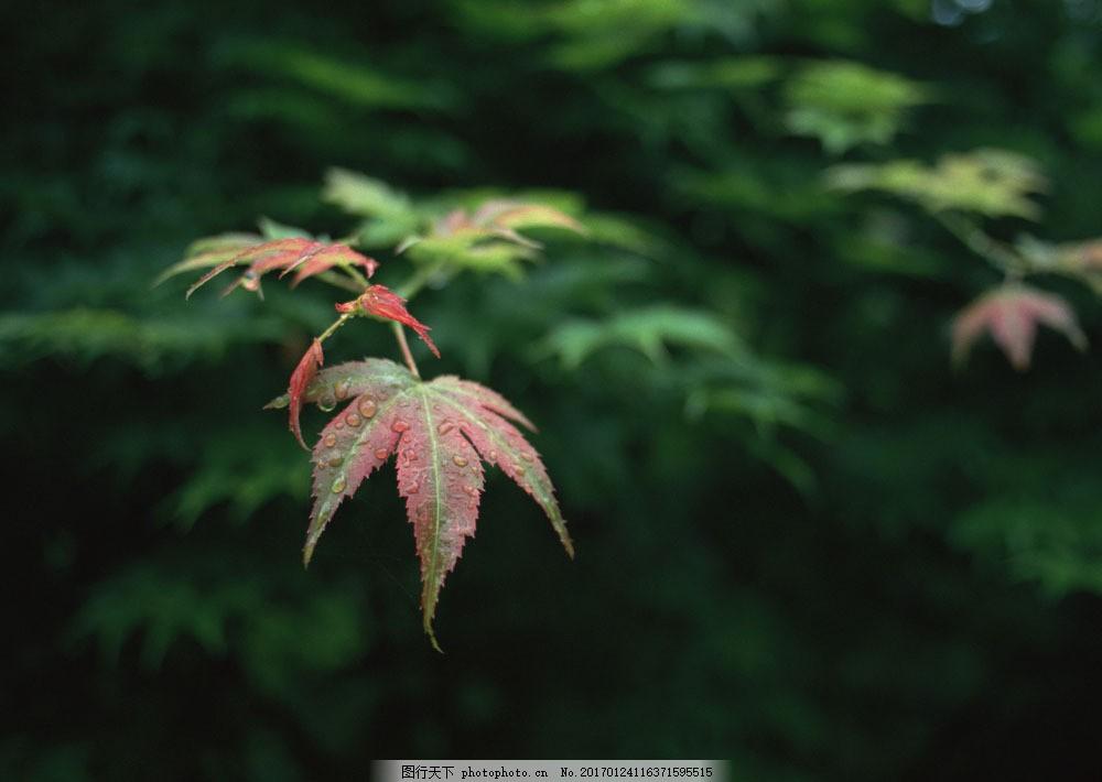 雨后树叶 雨后树叶图片素材 风景 美境 四季风景 自然 水珠 山水风景