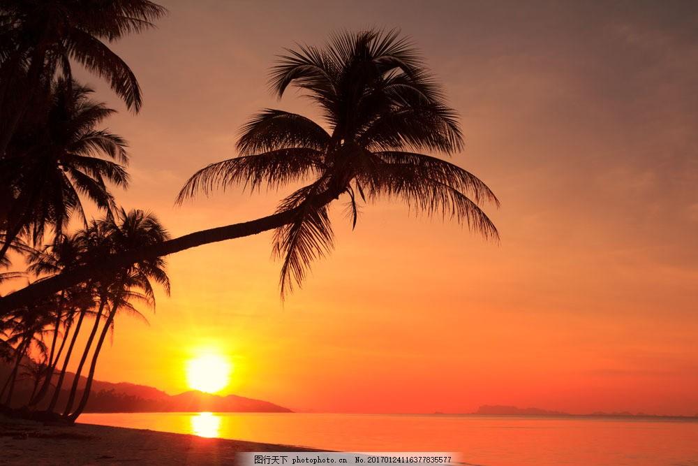 夕阳椰子树海洋风景图片素材 晚霞 霞光 日落 大海 海浪 椰子树 沙滩