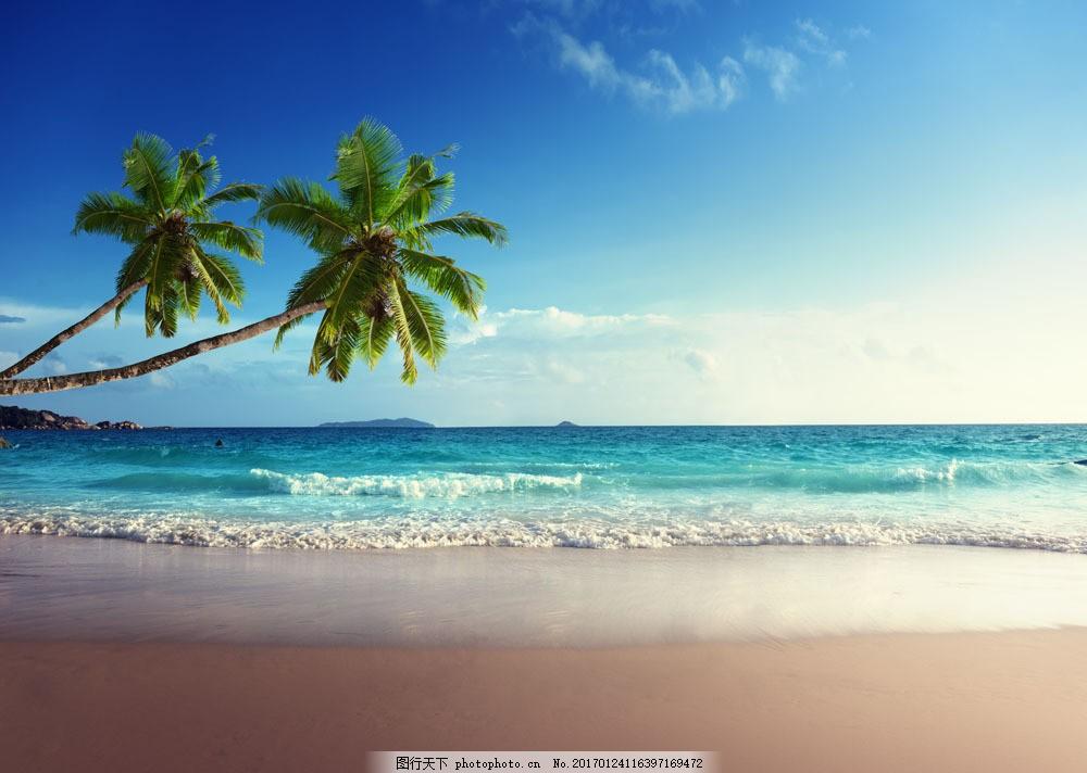 海滩椰树风景图片