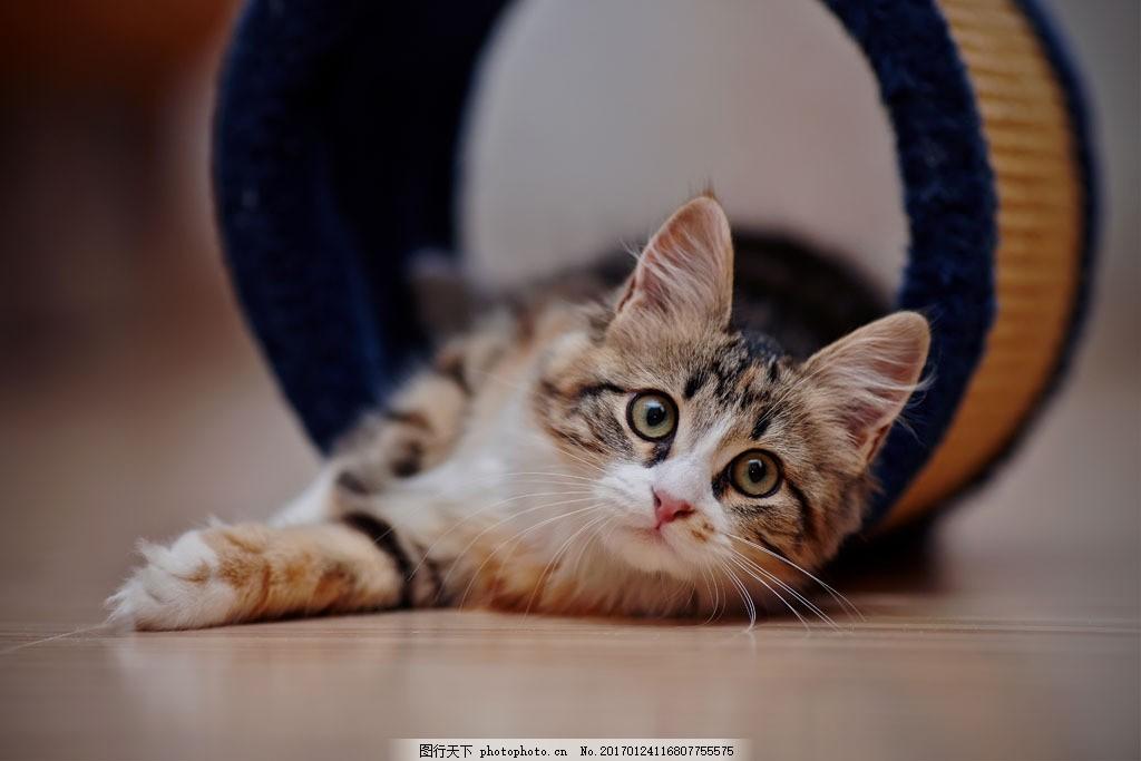 木桶的小猫 木桶的小猫图片素材 可爱猫 宠物猫 猫咪 动物 动物世界