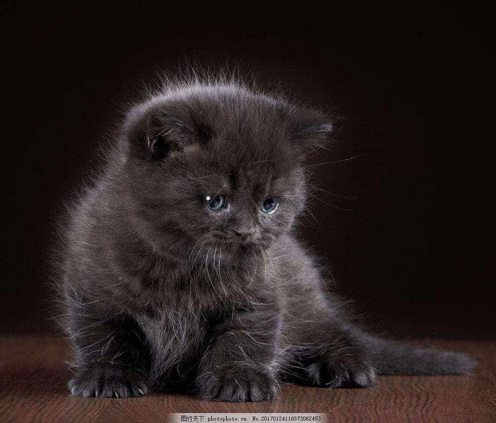 可爱小猫咪摄影图片素材 猫咪 小猫 宠物 可爱动物 萌宠 动物摄影