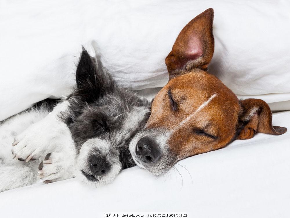 睡着的狗 睡着的狗图片素材 宠物狗 有趣的小狗 可爱动物 陆地动物