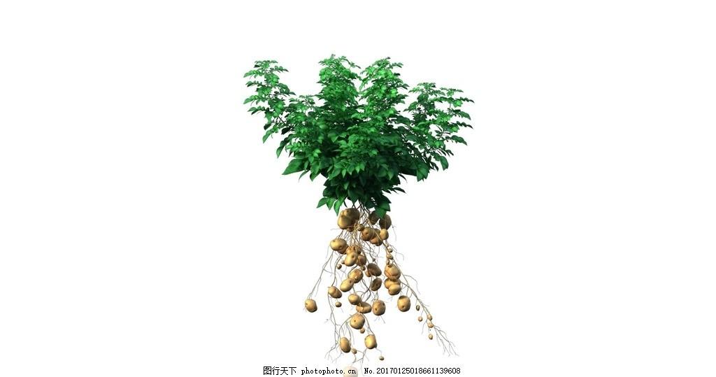 土豆生长动画 植物生长 马铃薯叶 土豆叶 动漫动画图片
