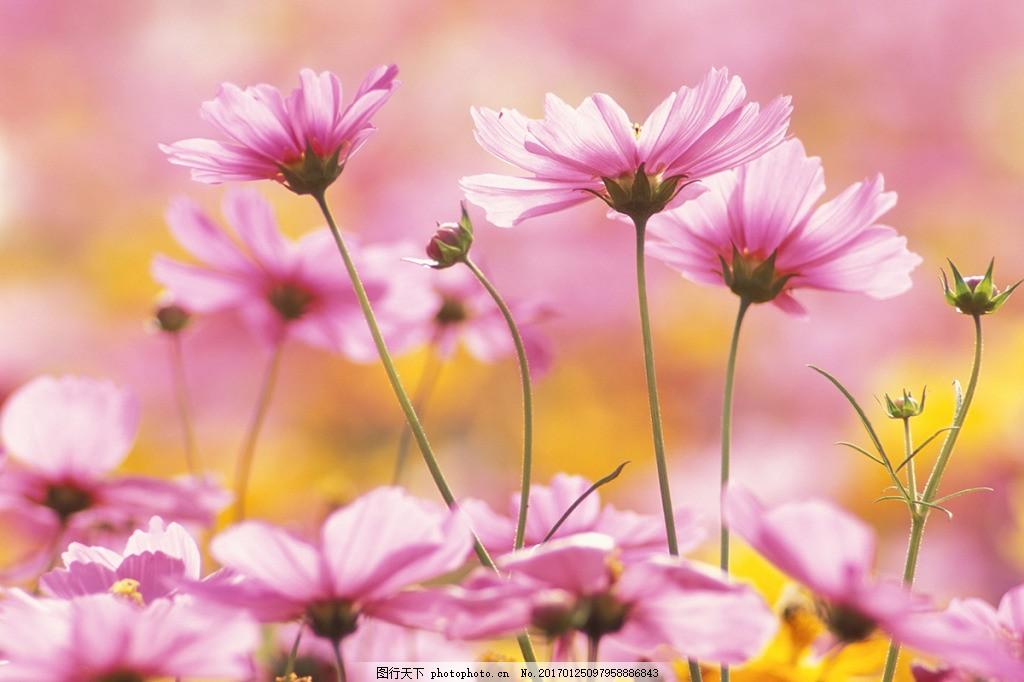 粉色荷花背景墙,壁纸 风景 高分辨率图片 高清大图-图