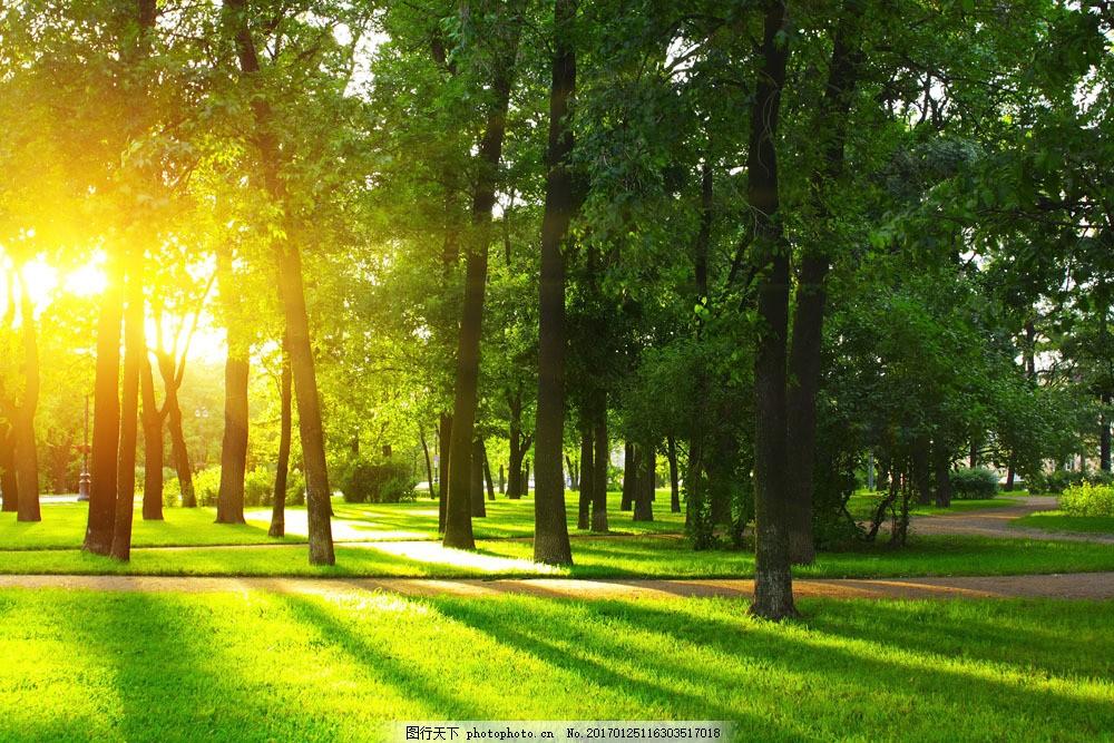 梦幻森林野草 梦幻森林野草图片素材 阳光 光线 草地 树林 仙境