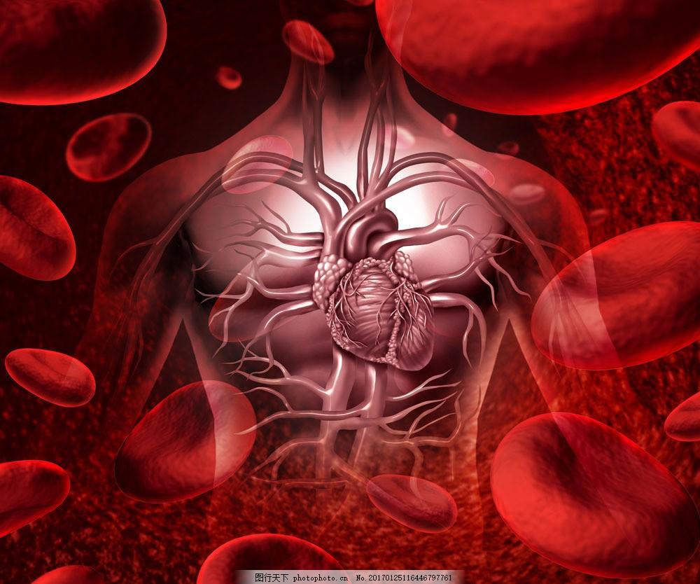 人体心脏模拟图图片图片