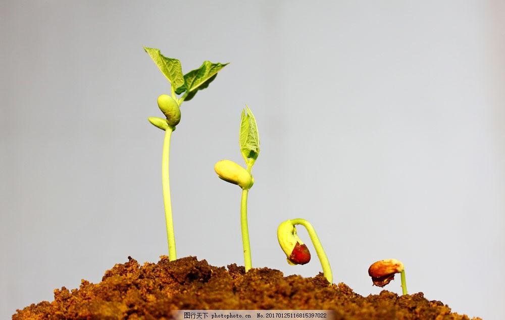 植物幼芽的生长过程 植物幼芽的生长过程图片素材 植物生长 土壤