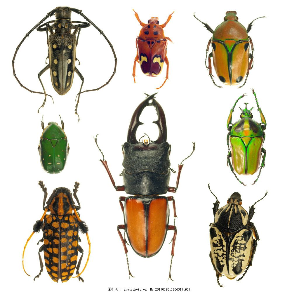 硬壳昆虫摄影 硬壳昆虫摄影图片素材 动物摄影 特写 昆虫世界 生物