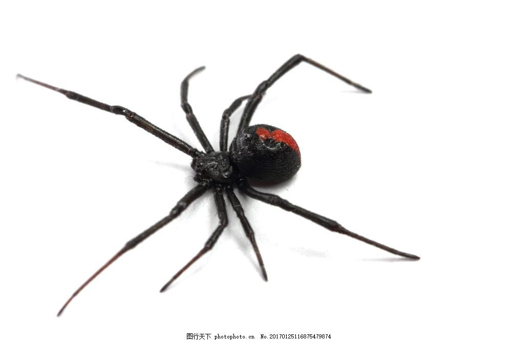 黑蜘蛛摄影 黑蜘蛛摄影图片素材 节肢动物 动物摄影 动物世界 动物
