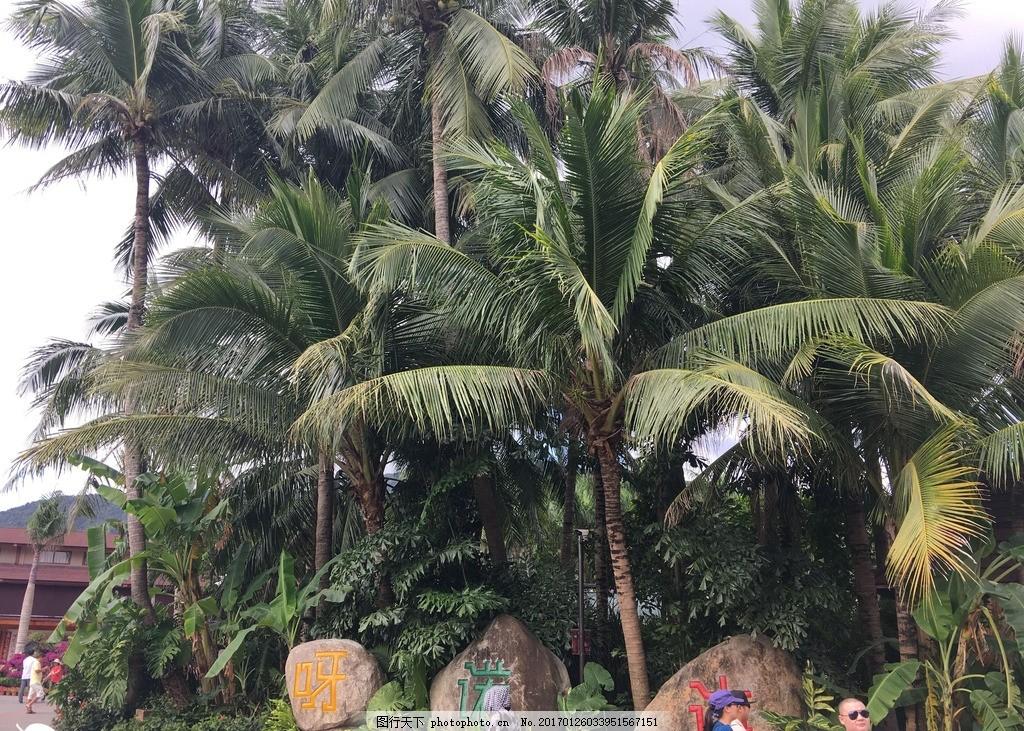 海南风光 椰树 湖水 天空 绿地 旅游 自然风景 摄影 旅游摄影 国内