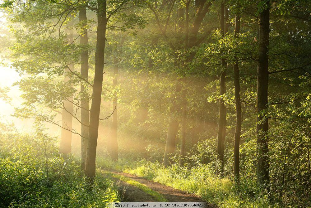 清晨小路风景图片,清晨小路风景图片素材 树林风景