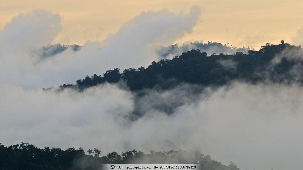 山上的雾和森林图片