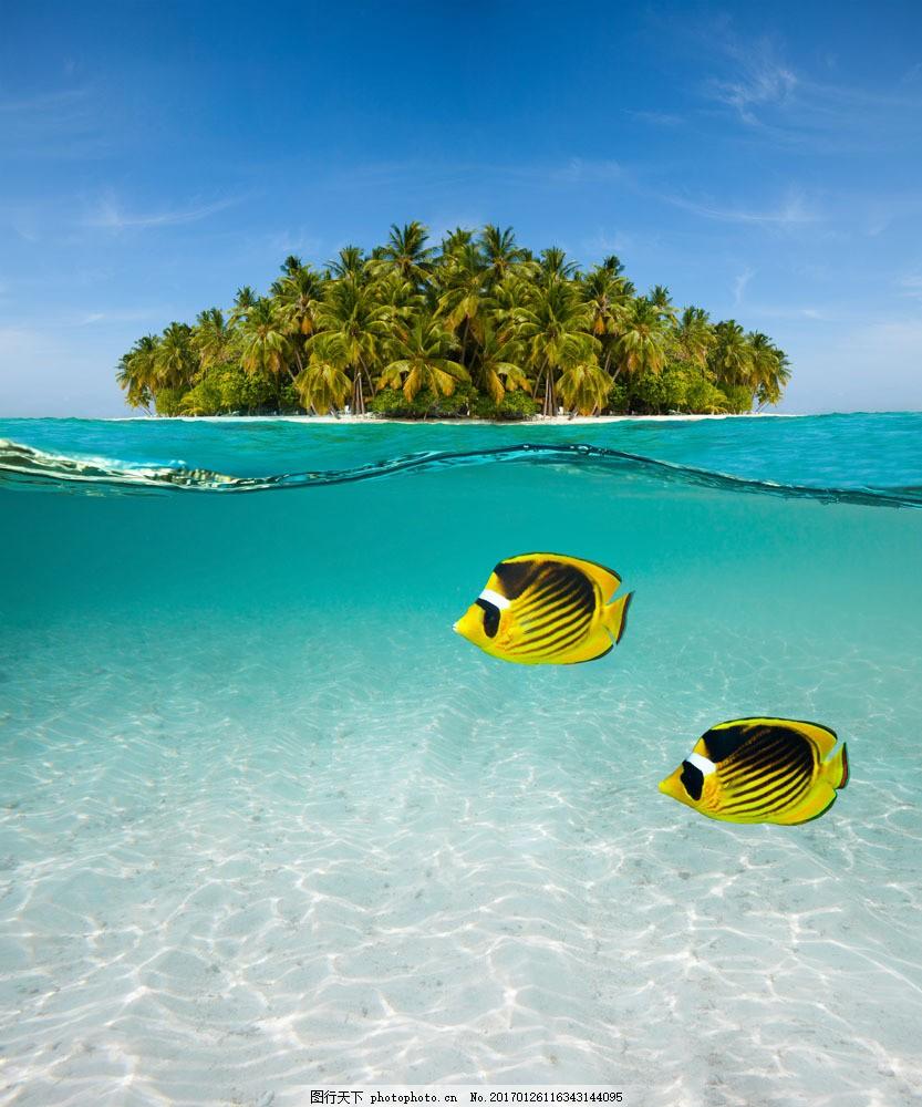 大海里的鱼 大海里的鱼图片素材 海水 岛屿 椰树 大海图片 风景图片