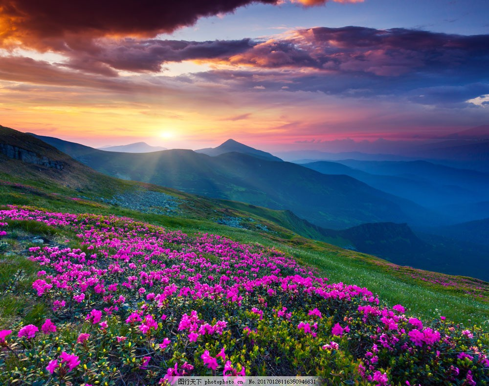夕阳下的花海风景图片