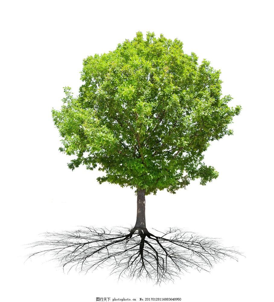 绿色树木图片素材 树根 古树 大树 绿树 树木 树林 绿叶 叶子 树枝