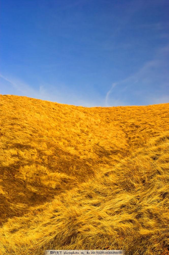 金色稻田 金色稻田图片素材 季节 秋季 丰收 天空 成熟 山水风景