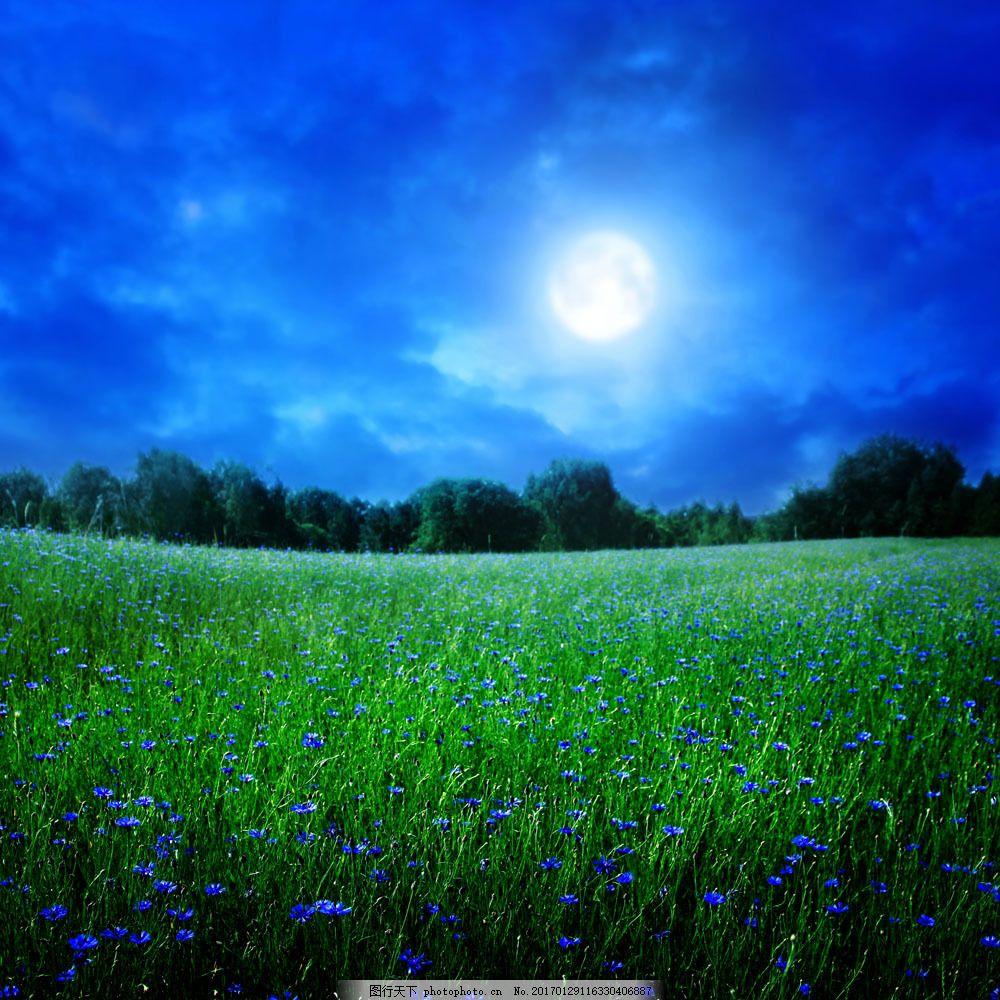 设计图库 高清素材 自然风景  美丽草原夜晚图片素材 草原夜晚 鲜花