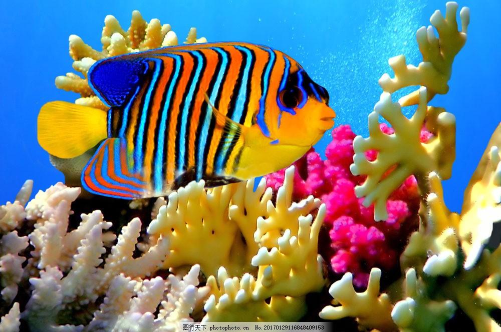 美丽的珊瑚和鱼 美丽的珊瑚和鱼图片素材 鱼类动物 海底世界 海洋生物