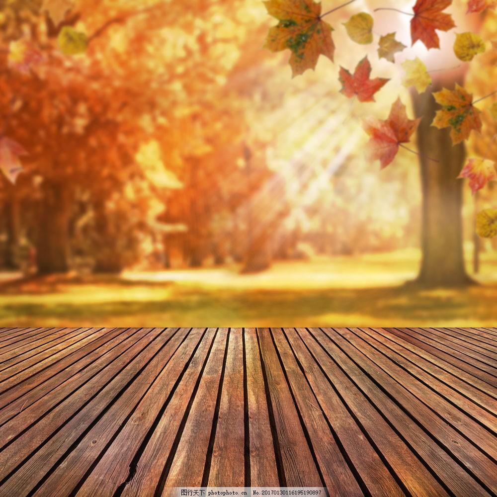 木板 木纹 枫树林 枫叶 落叶 叶子 叶片 秋天主题 美丽自然风景 花草
