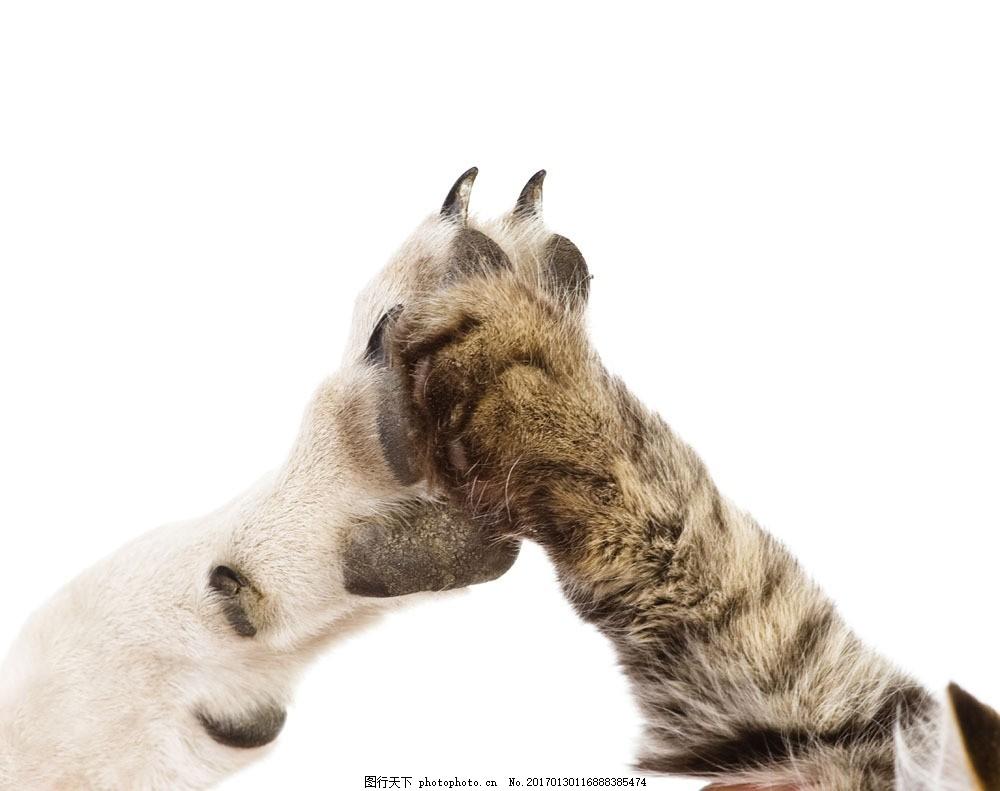可爱的狗爪和猫爪图片