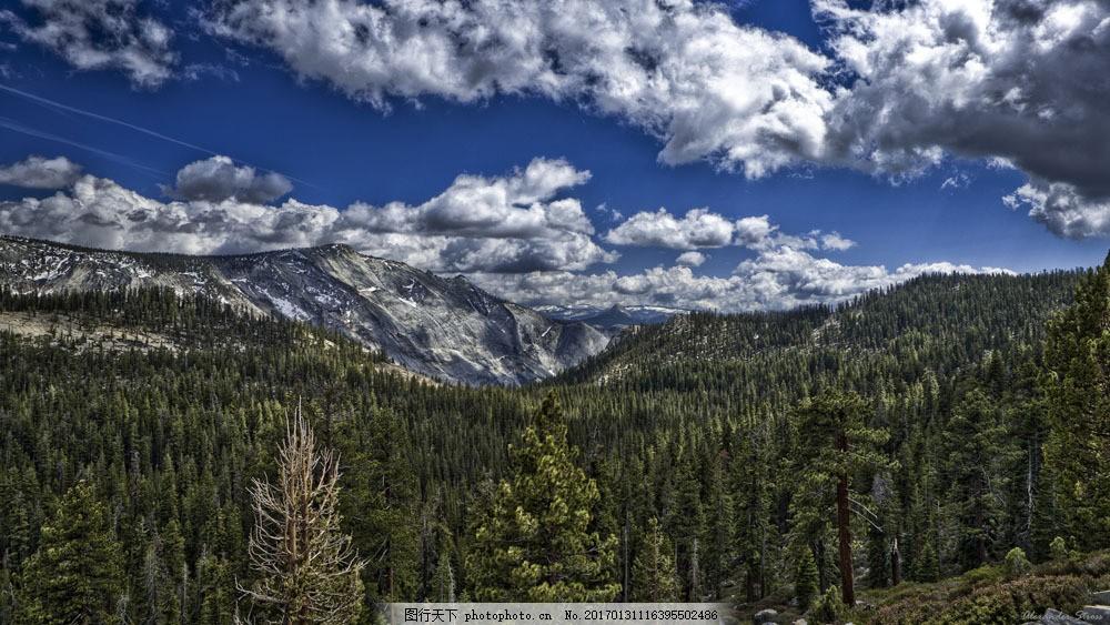 蓝天白云与树木风景图片素材 蓝天白云与树木风景 蓝天白云 森林风景