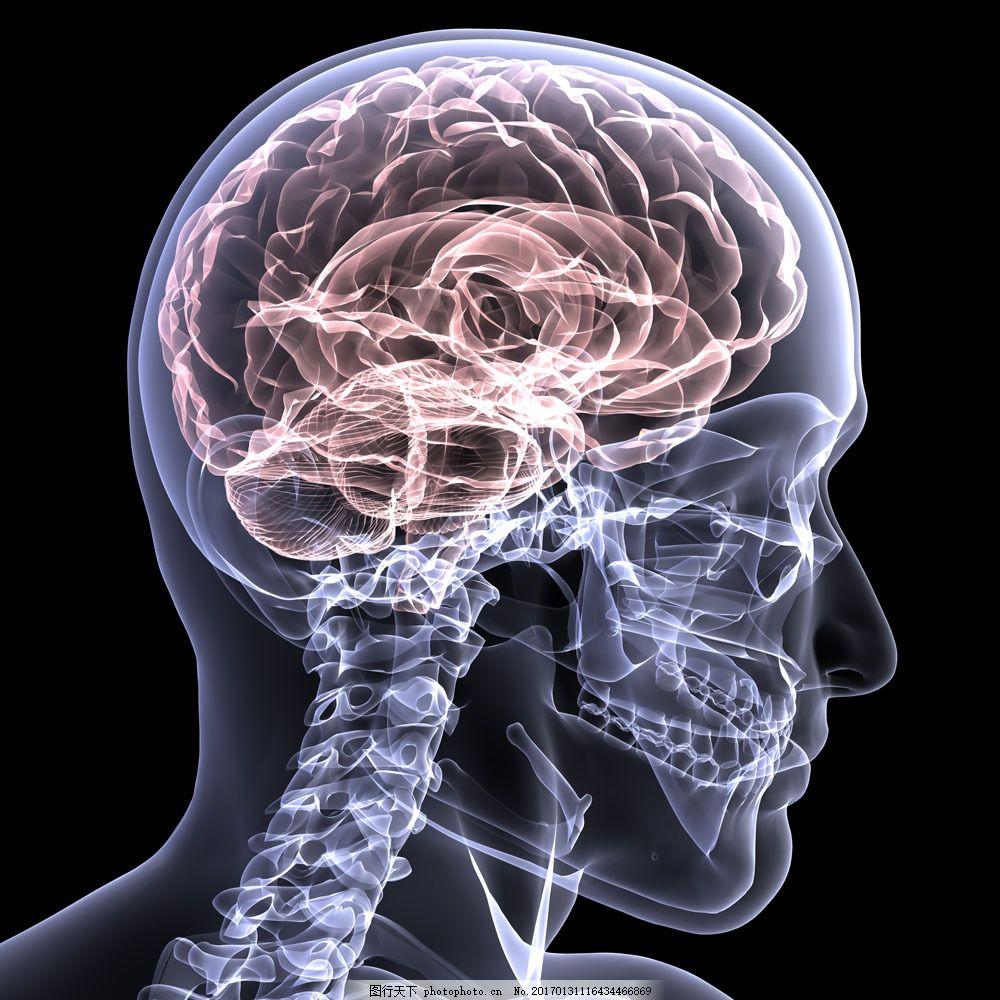 人体透视图 人体透视图图片素材 结构 人体结构 器官 骨骼 脑部