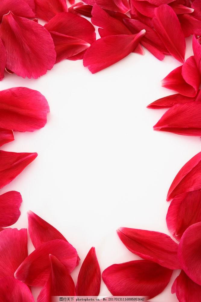 玫瑰花花瓣边框图片图片