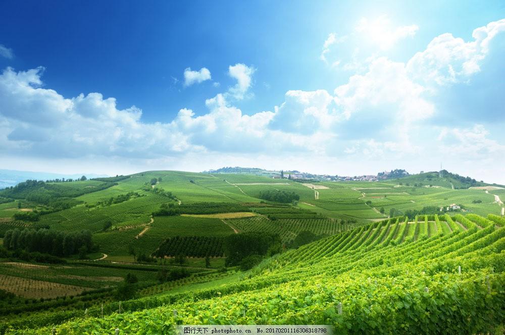 绿色田野田地风景 绿色田野田地风景图片素材 蓝天白云 美丽风景