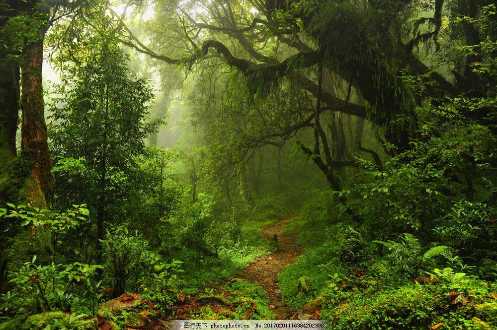 丛林树木图片