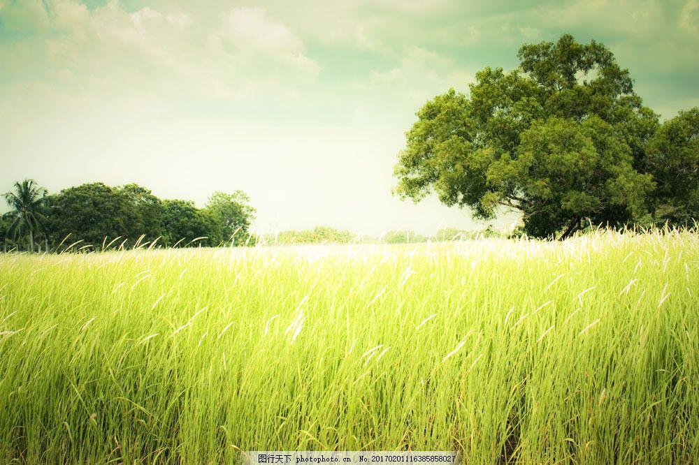 乡间美景 乡间美景图片素材 田园风光 树木 天空 蓝天 白云 光芒