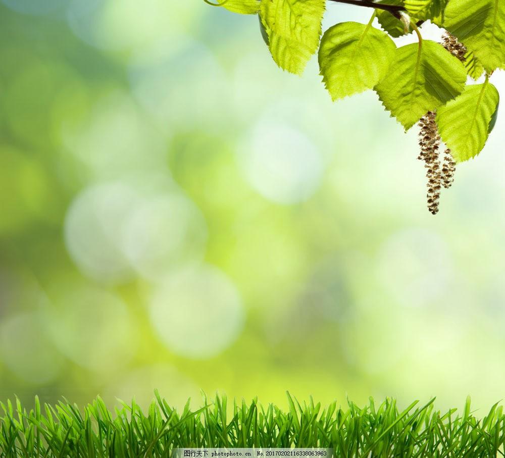 植物 绿色 背景 新鲜 自然 树叶 草地 春天 山水风景 风景图片 图片