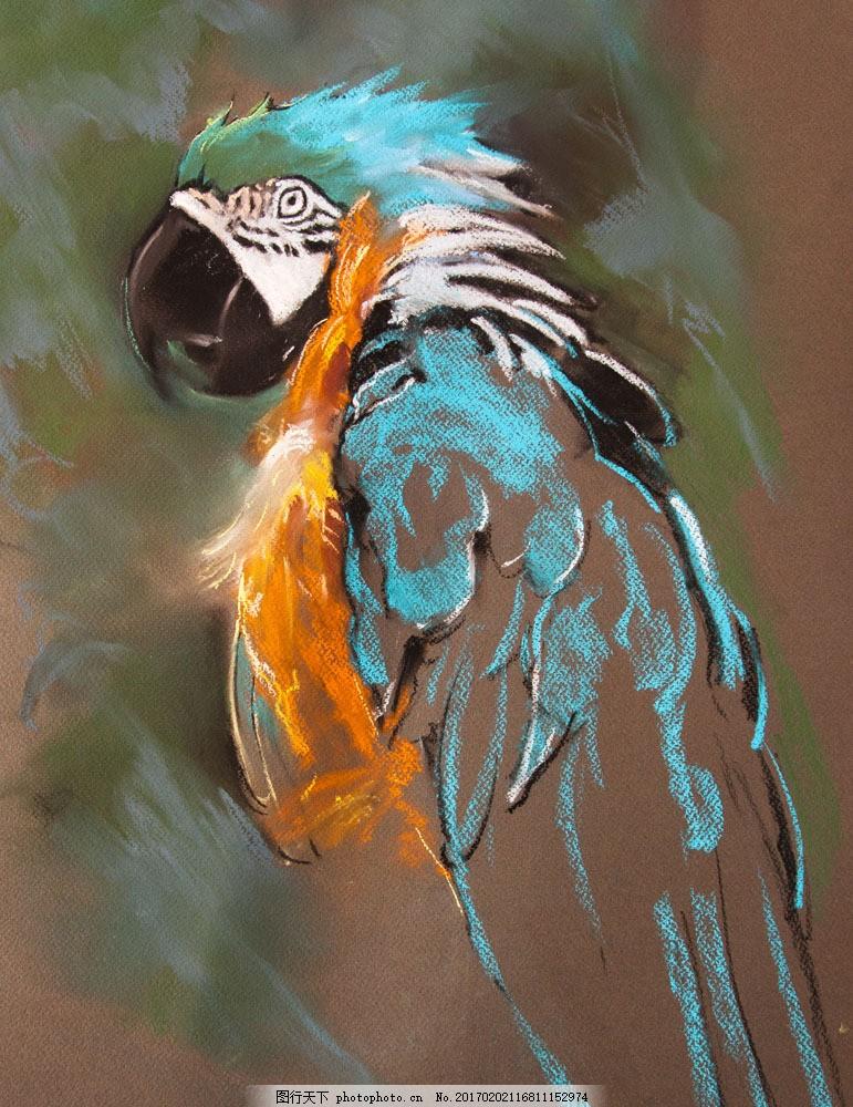 水彩画鹦鹉 水彩画鹦鹉图片素材 空中飞鸟 鸟类 禽类 动物 野生动物