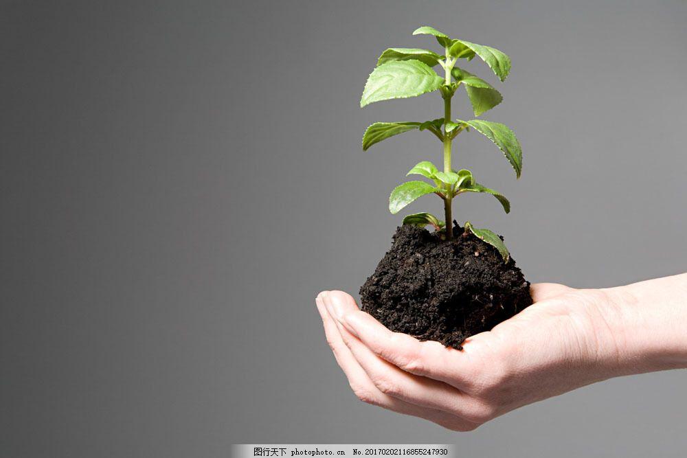 高清素材 动植物  手捧着一棵树苗图片素材 绿植 植物 小草 养育 叶子