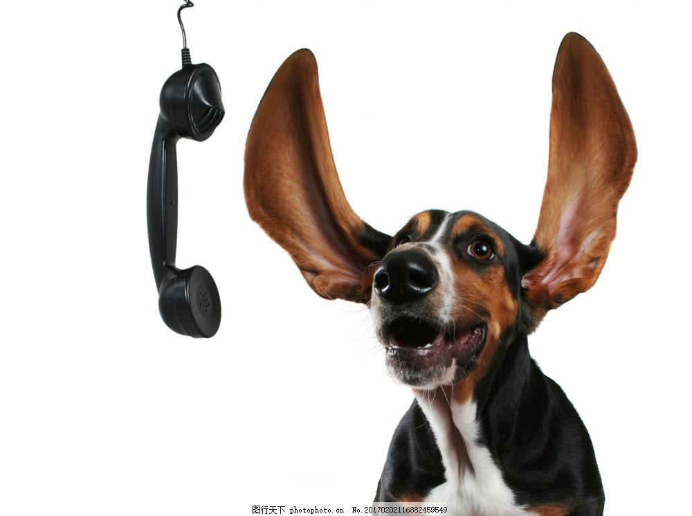 宠物狗图片素材 有趣的动物 动物世界 创意 抽象动物 宠物狗 小狗