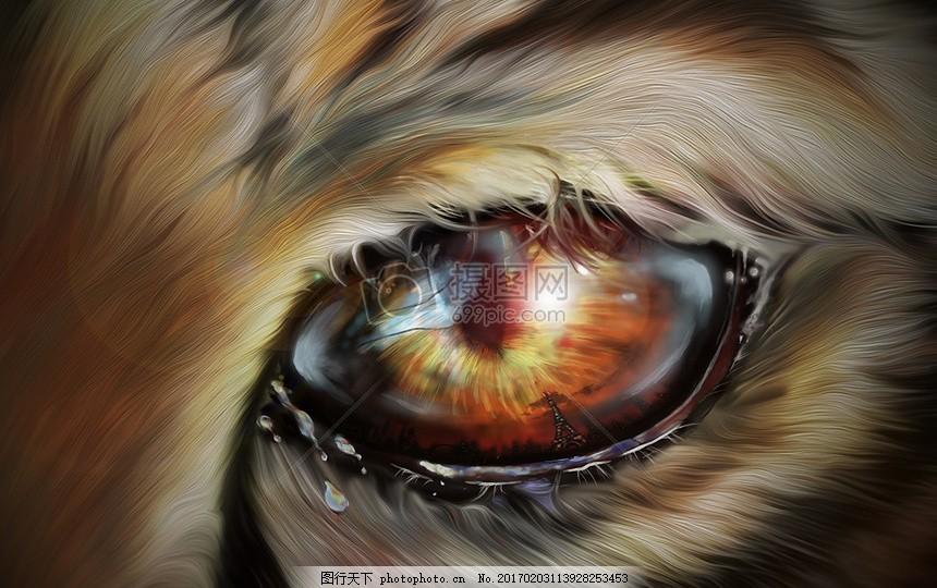 小动物的眼睛