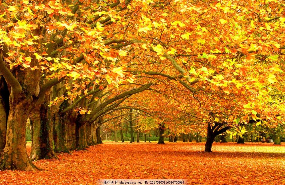 秋天枫叶风景图片图片