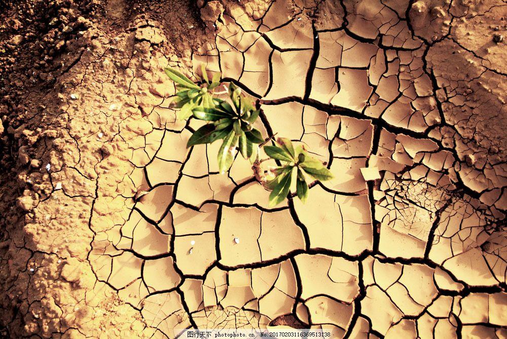 干涸的地面 干涸的地面图片素材 干旱 旱灾 干枯的土地 裂缝 裂纹