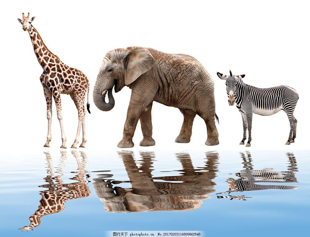 非洲动物与水面倒影图片