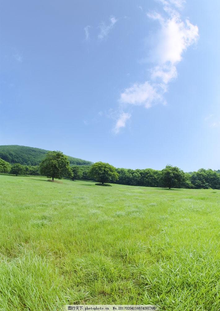 绿色草地主题风景图片图片