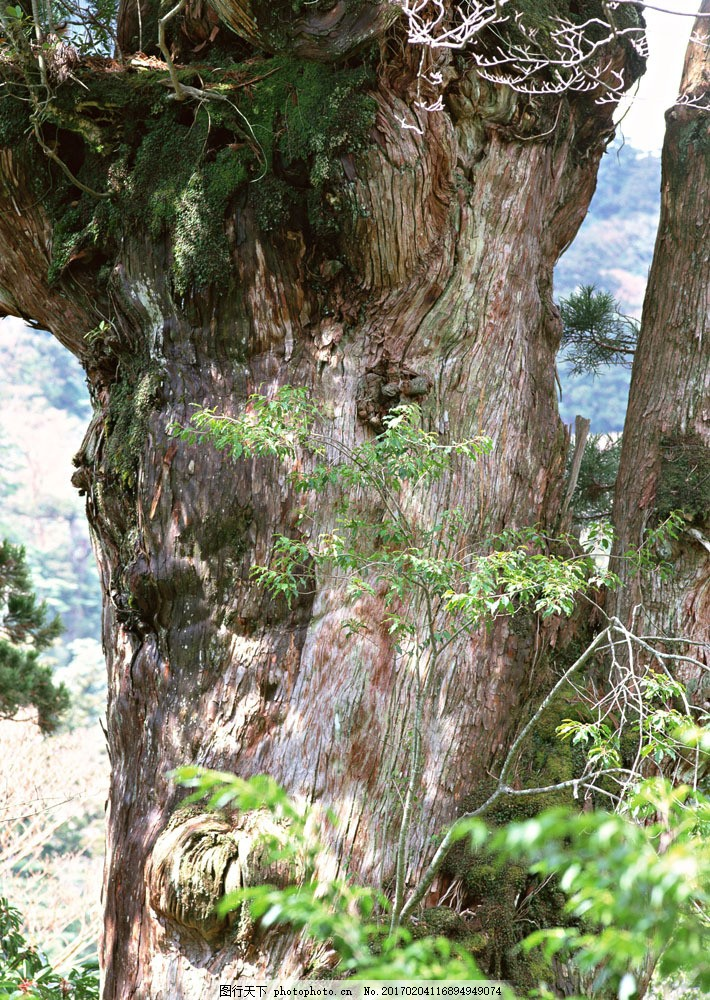 大树树根图片