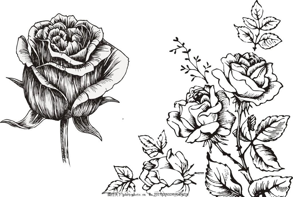 素描玫瑰花 线条 玫瑰花卉 欧式古典 手绘玫瑰 复古花卉 复古风格