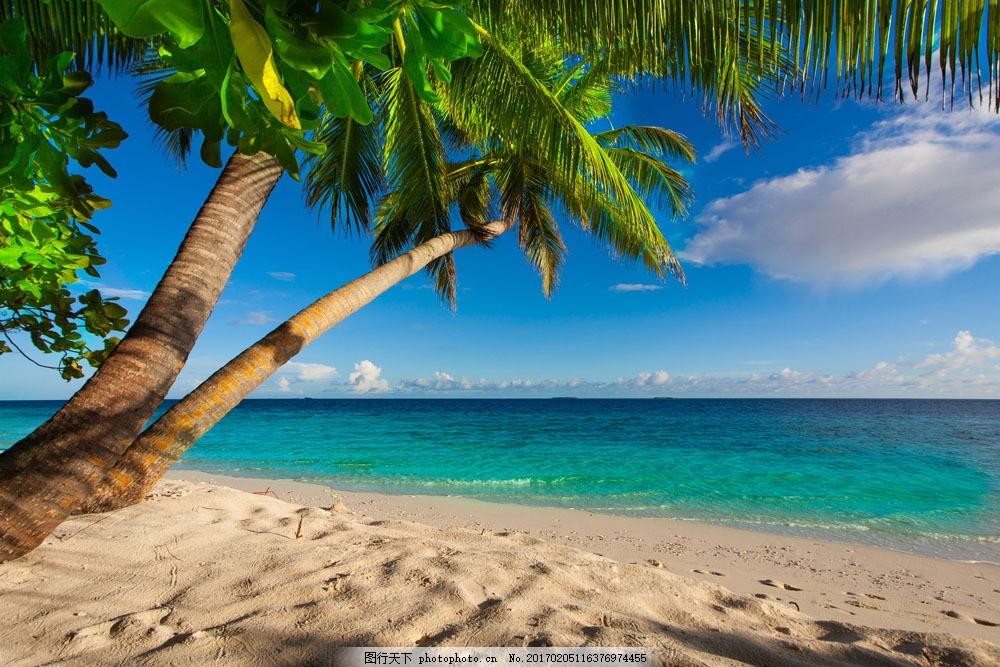 大海椰子树风光图片