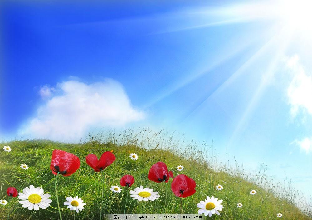 美麗鮮花 花朵 花卉 草地 藍天白云 雛菊 菊花 山水風景 風景圖片