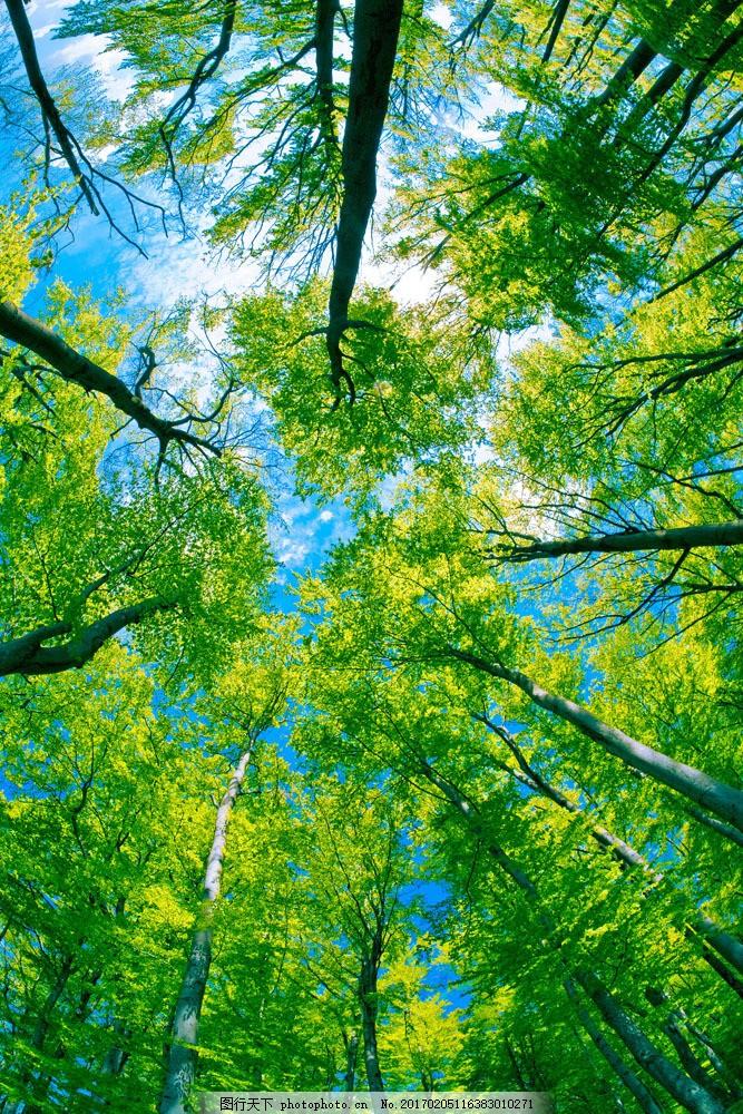 大树景色摄影图片素材 大树 蓝天 白云 茂密 景色摄影 绿叶 山水风景