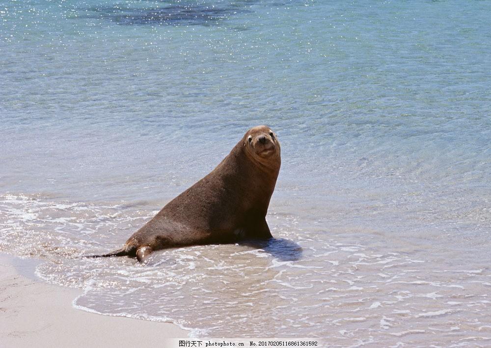 海边可爱的海豚图片素材 动物世界 生物世界 海底生物 海豚 大海 水中