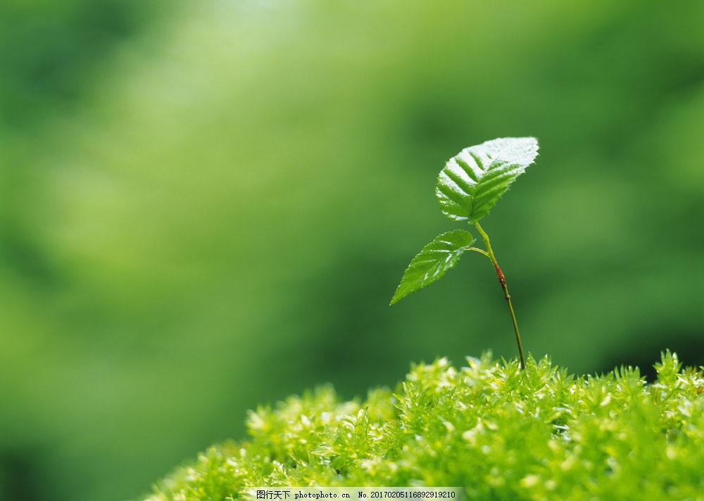 春天绿芽图片素材 绿芽 新芽 植物新芽 植物绿芽 春天绿芽 花草树木