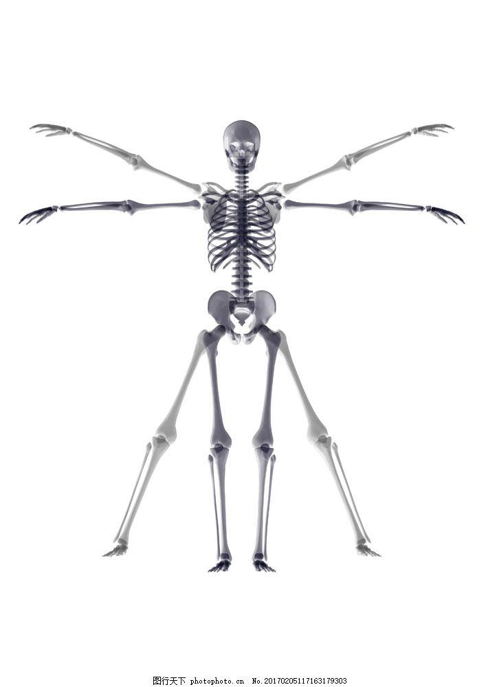人物 人物素材 人物骨架 骷髅 骷髅素材 骷髅摄影 人做结构 骨头 图片