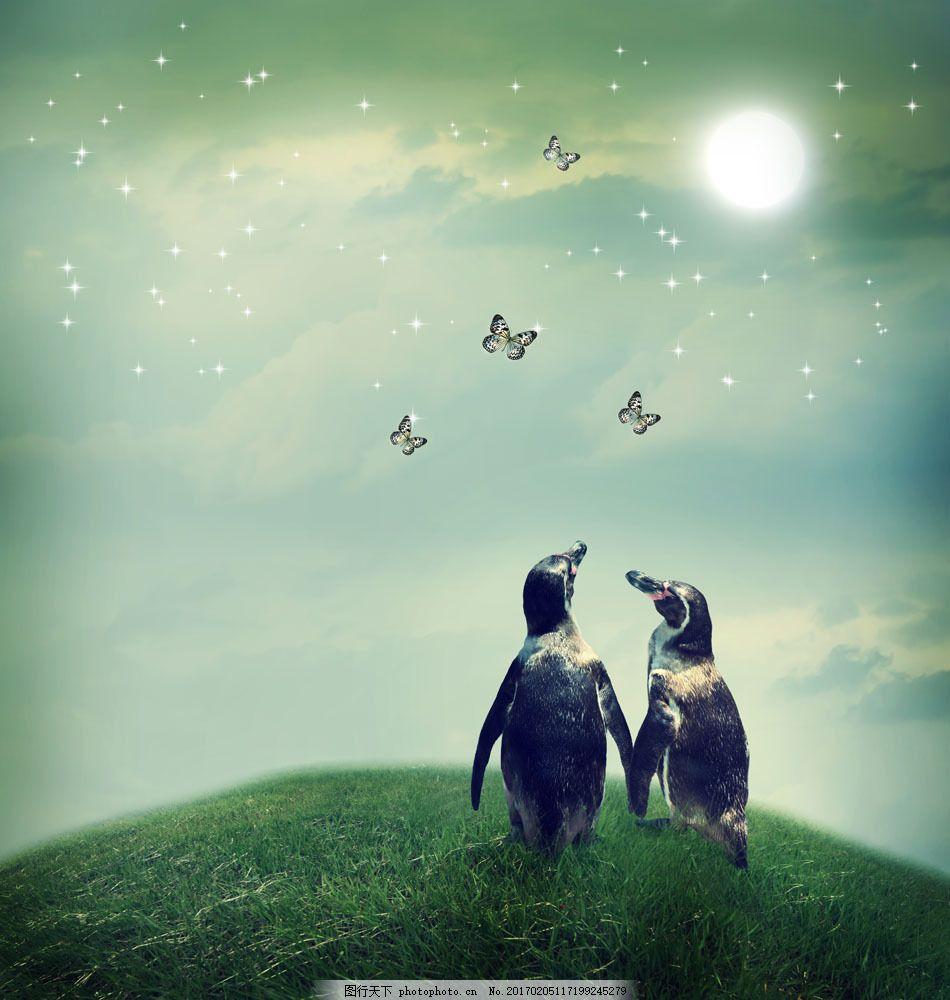 草地上的两只企鹅图片素材 梦幻 企鹅 可爱 蝴蝶 夜晚 草地 其他类别